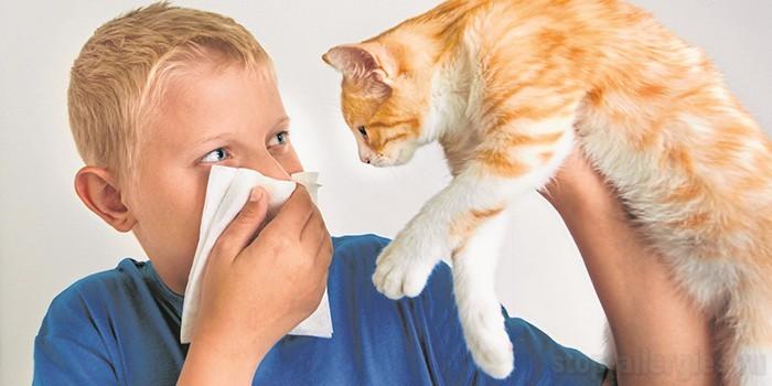 Аллергия на кошек • Как вылечить аллергию