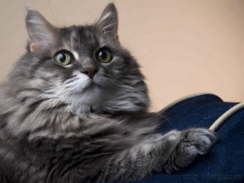 Симптомы аллергии на корм у котенка