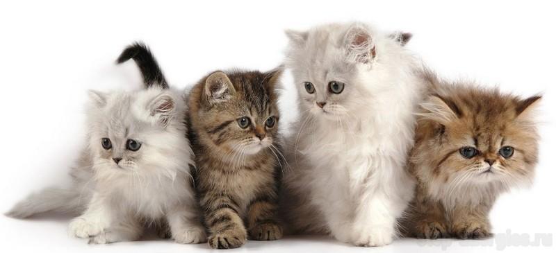Аллергия на сфинксов, лысых кошек. Аллергия на канадского сфинкса, донского сфинкса