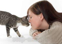 Как избавиться от аллергии на кошку • Как вылечить аллергию