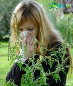 Аллергия на амброзию: как и чем лечить, таблетки, симптомы