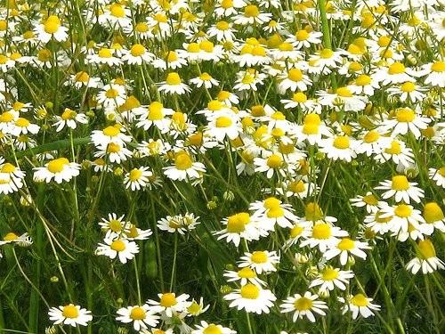 травы от аллергии для детей для купания
