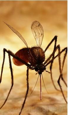 Аллергия на укусы комаров у детей • Как вылечить аллергию